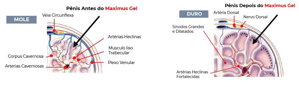 Maximus Gel